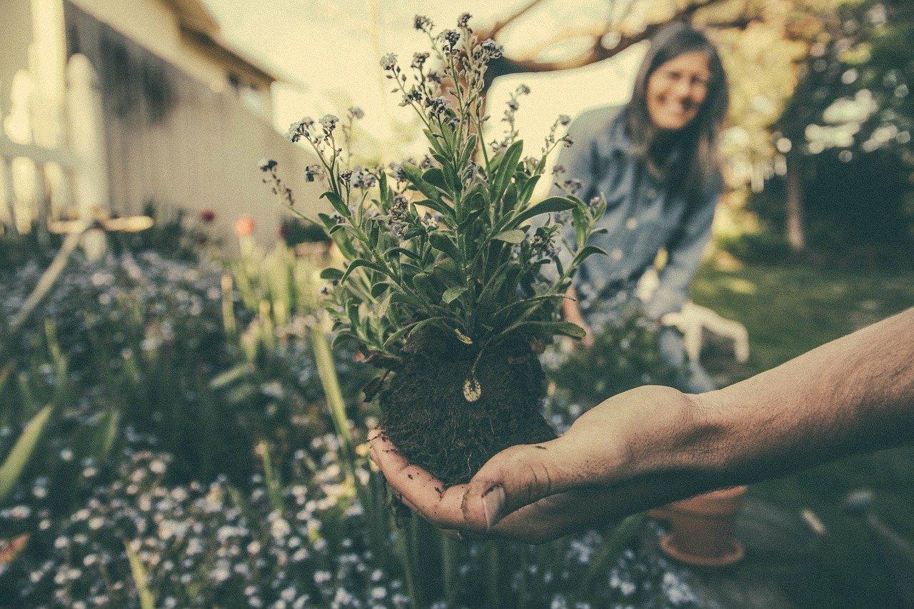 Plants & Gardening = grow